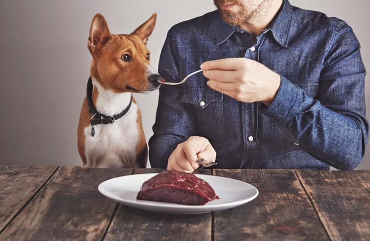 Tierärzte empfehlen gesundes Futter