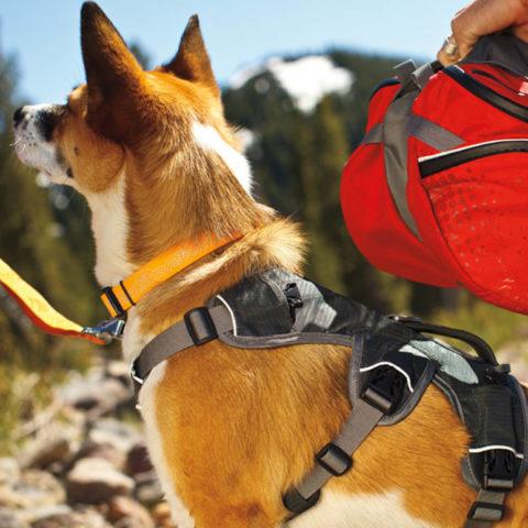 Funktionales Zubehör für Outdoor und Hundetraining Archive ...